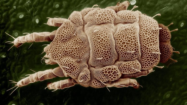 FDA Approves House Dust Mite Allergies Treatment Odactra