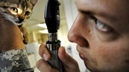 FDA Will Treat Animal Patients: The Veterinary Case